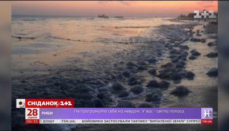 """""""Сніданок"""" дізнався, чому медузи заполонили чорноморське узбережжя"""