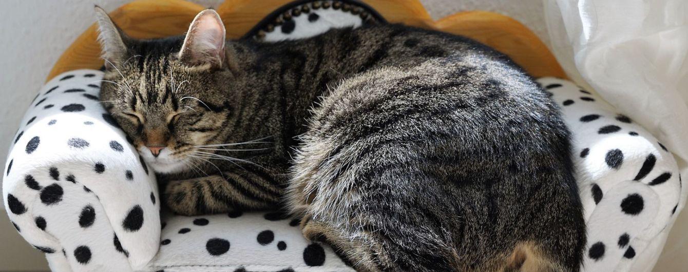 У Києві з'явився садист-шкуродер, що полює на котів