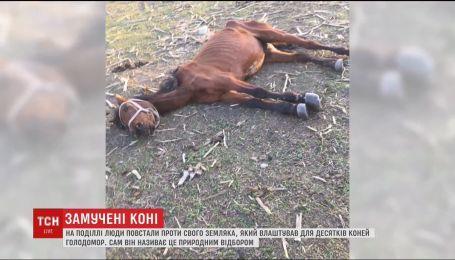 Жители Каменец-Подольского восстали против земляка, который морит голодом десятки своих лошадей