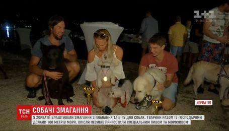 Чотирилапі атлети: у Хорватії влаштували змагання з плавання та бігу для собак