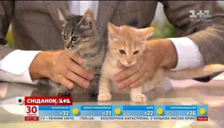 Кошенята Персик, Люк і Соня шукають господарів