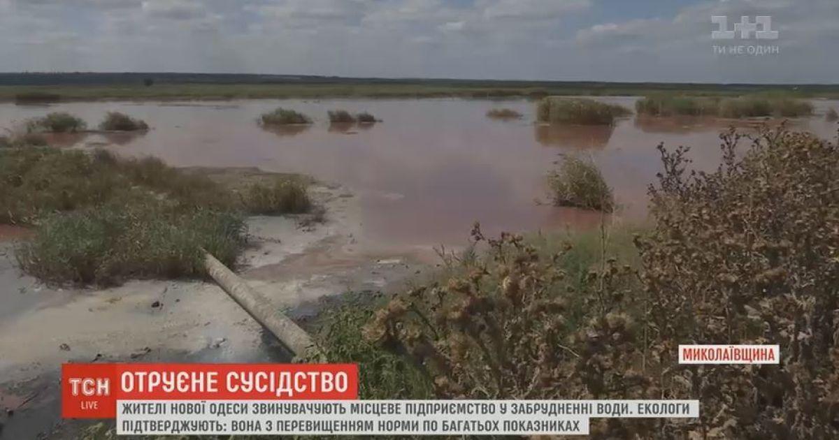 На Николаевщине маслозавод грязными стоками вызвал местную экологическую катастрофу