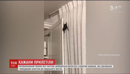 Жилье украинцев все чаще атакуют летучие мыши