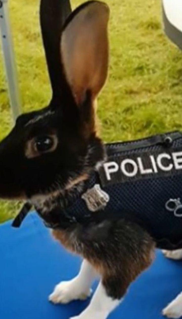 Інтернет підірвало фото кролика у поліцейській формі