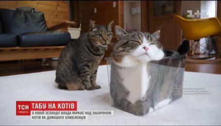 У Новій Зеландії влада міркує над забороною котів як домашніх улюбленців