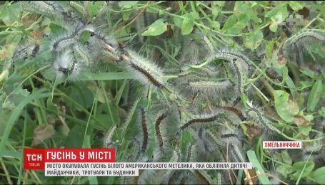 Город Волочиск Хмельницкой оккупировала мохнатая гусеница