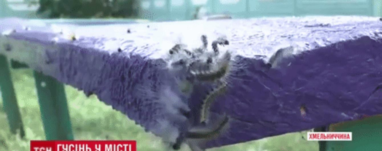 Місто на Хмельниччині кишить гусеницями: личинки масово сипляться людям на голови
