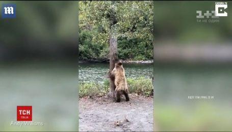 Медвежий тверк: в Канаде косолапый освоил популярный танцевальный стиль
