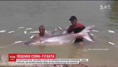 На Київщині люди бояться, що гігантський сом з озера може напасти на відпочивальників