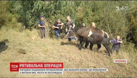 Спасатели привлекли кран-подъемник, чтобы достать корову из выгребной ямы