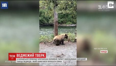 В Канаде медведь освоил тверк