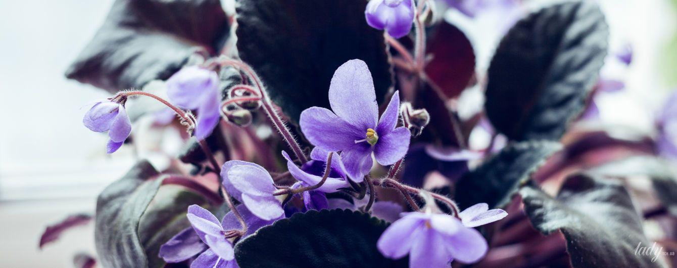 Комнатные растения, цветущие ярко и долго