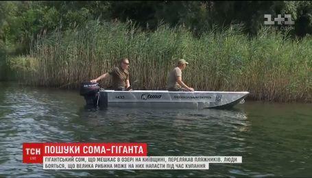 На Киевщине отдыхающих напугал гигантский сом
