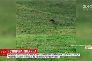 Австрия или Австралия: в европейской стране заметили одинокого кенгуру