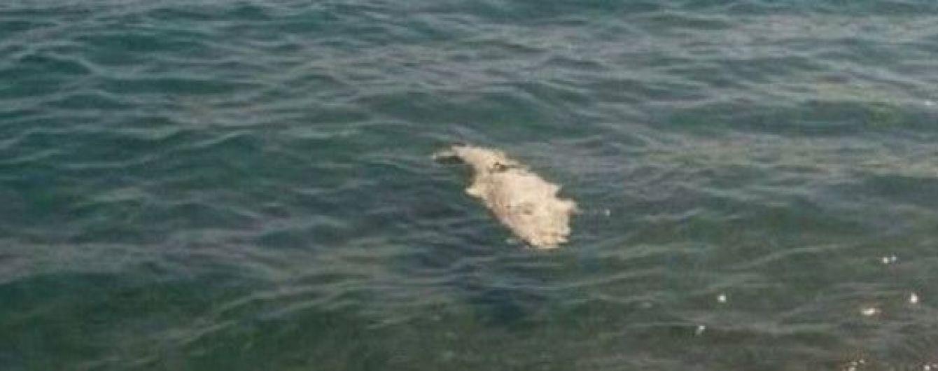 В анексованому Криму на пляжі знайшли мертвого крокодила