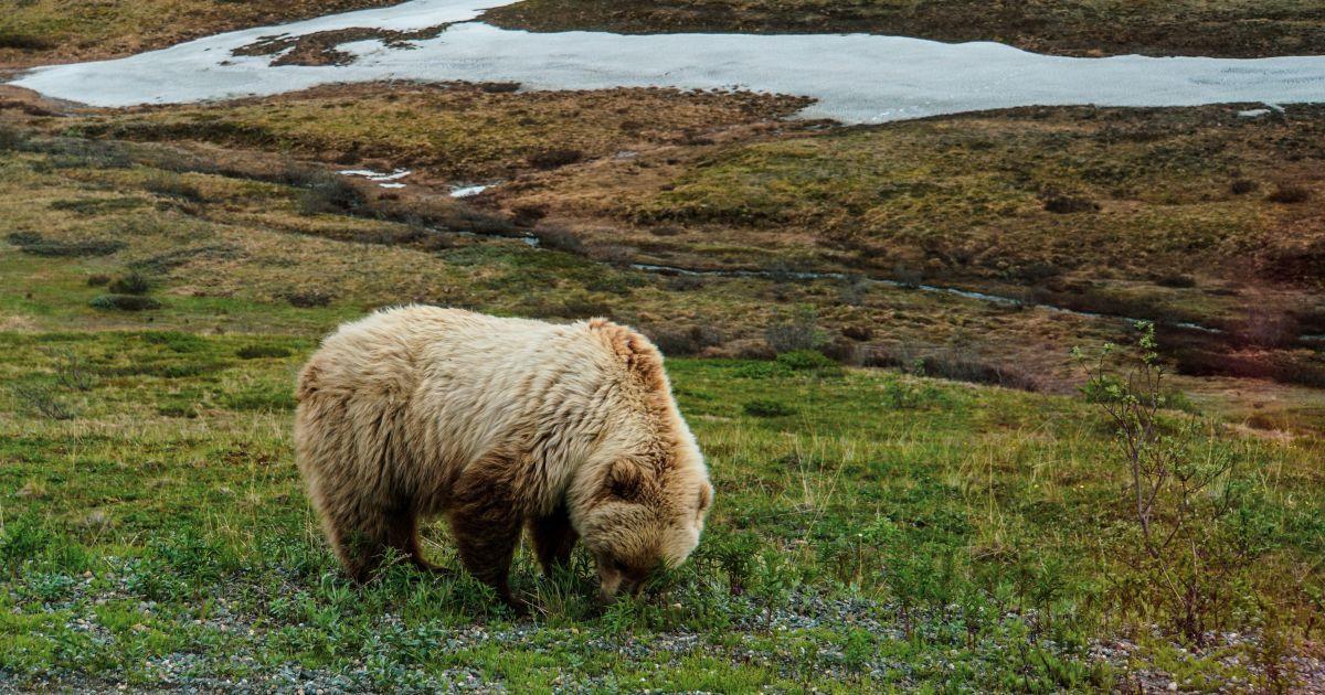 5 причин отправиться на Аляску
