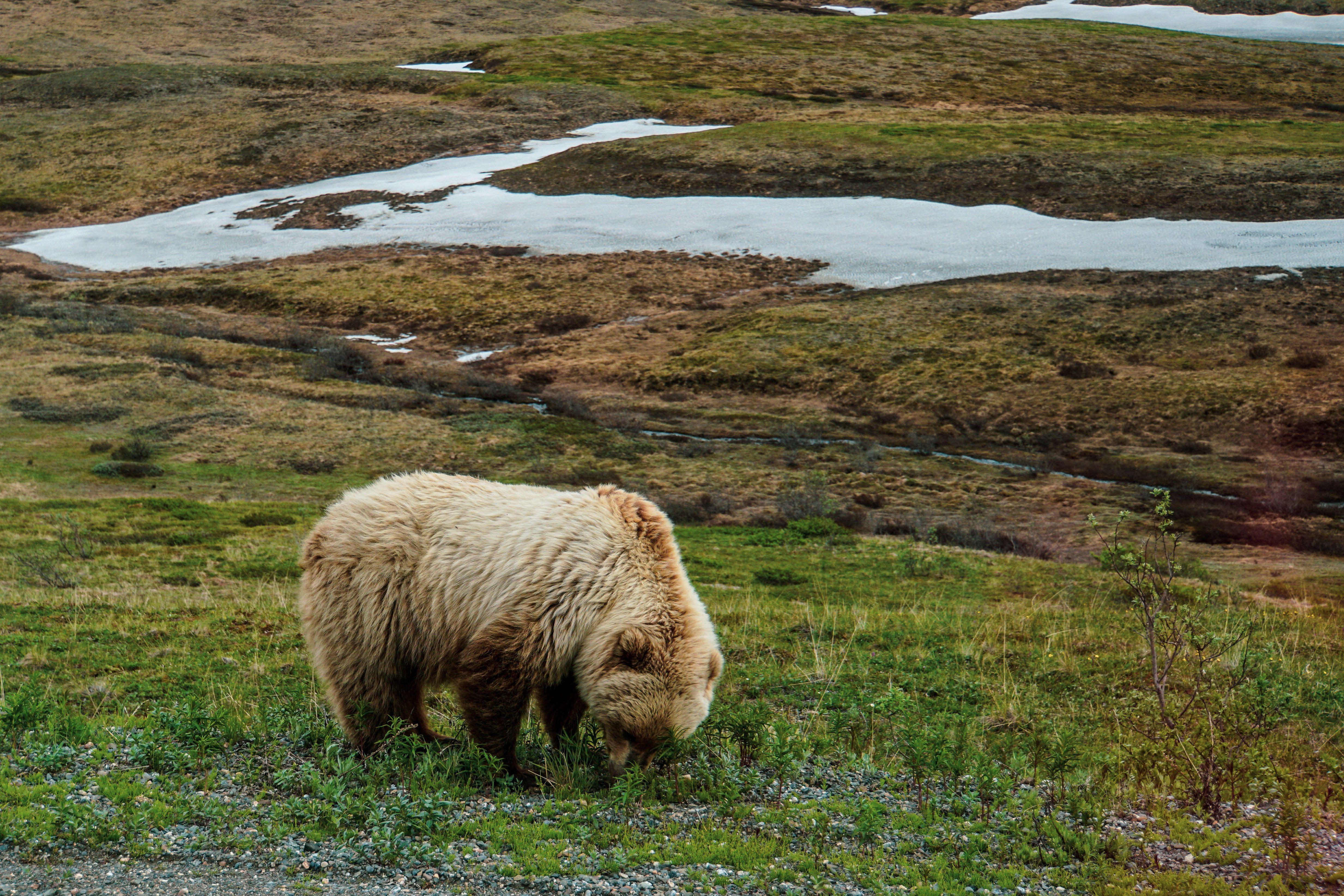 Аляска, для блогів_16