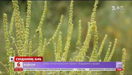 Амброзия атакует украинцев: как облегчить симптомы аллергии