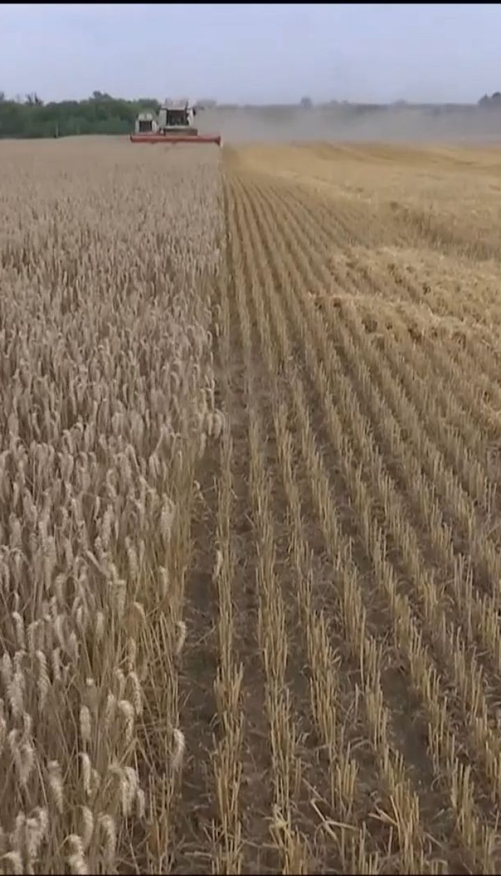 Хліб може здорожчати до кінця року через погодні аномалії в Україні