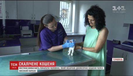 В Тернополе зоозащитники требуют наказать мужчину, который покалечил котенка