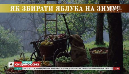 Як правильно збирати і зберігати яблука - Осінь на дачі з Ольгою Пахар