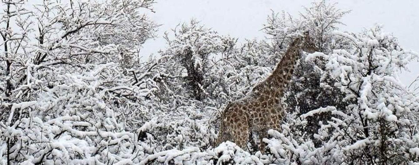 В Африці несподівано випав сніг