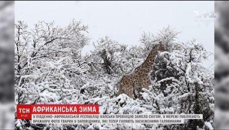 В африканском природном заповеднике неожиданно выпал снег