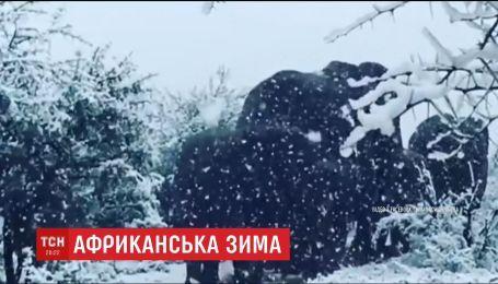 В Африке выпал снег. Заповедник замело вместе с животными