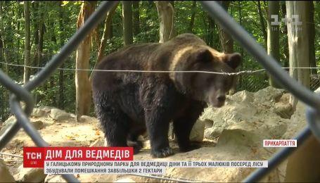 Вольер размером с 3 футбольных поля построили для семьи бурых медведей на Прикарпатье