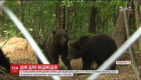 Апартаменти для родини ведмедів. На Прикарпатті збудували вольєр завбільшки 3 футбольних поля