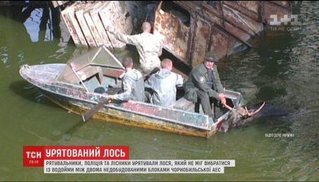Спецоперация в Чернобыльской зоне. Как чрезвычайники, лесники и полиция спасали лося