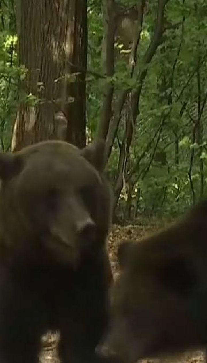 Апартаменты для семьи медведей. На Прикарпатье построили вольер размером с 3 футбольных поля