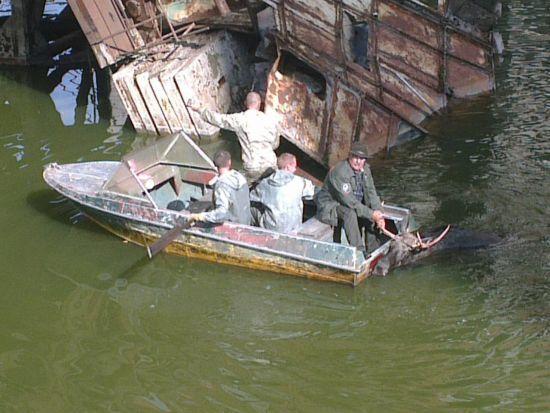 На Чорнобильській АЕС урятували з пастки лося