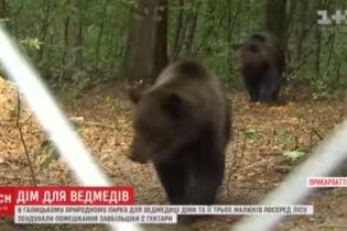 На Прикарпатье медведице Дине и ее детенышам построили вольер величиной с три футбольных поля