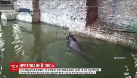 Чрезвычайники, лесники и полиция спасли лося на территории Чернобыльской АЭС