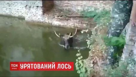 На Чернобыльской АЭС спасли лося из водоема