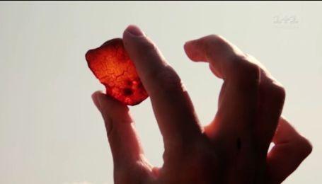Почему янтарная мафия - бессмертна