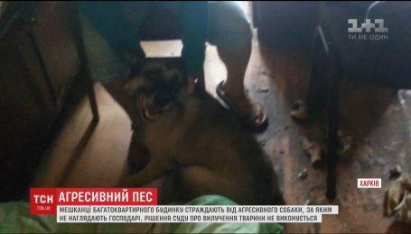 Агрессивный пес - напуганные соседи. В Харькове жители дома страдают от постоянных нападений собаки