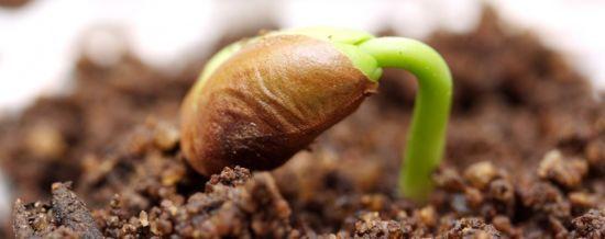 На що слід звертати увагу при купівлі насіння
