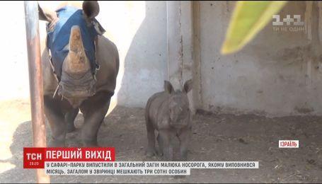 В израильском сафари-парке показали малыша носорога