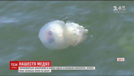 Ядовитые медузы атаковали черноморское побережье в Одессе