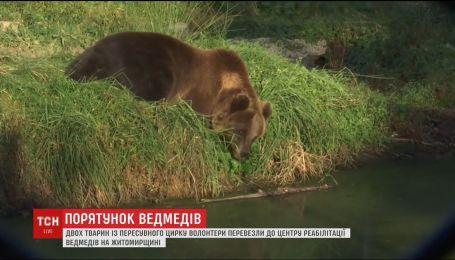 Из передвижного цирка Чернигова в центр реабилитации перевезли двух медведей