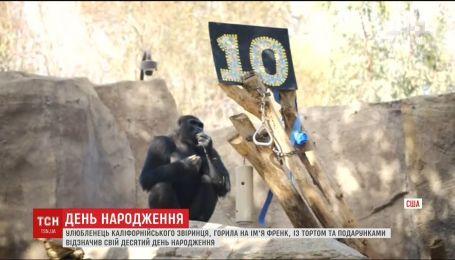 В калифорнийском зверинце горилла Фрэнк отметил 10-летие с подарками