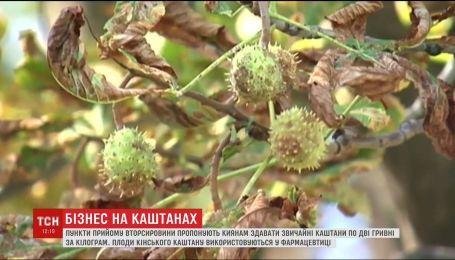 Як здати київські каштани та заробити