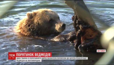 Спасение медведей. С передвижного цирка в центр реабилитации перевезли двух косолапых
