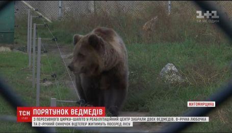 Двух медведей, которые всю жизнь работали в цирке-шапито, перевезли в реабилитационный центр