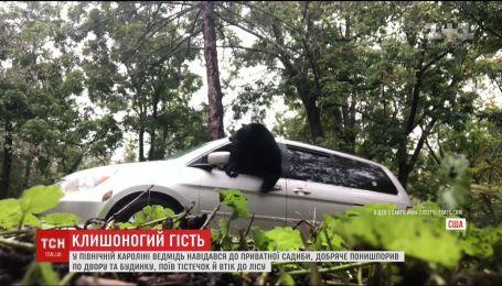 У Північній Кароліні ведмідь поїв тістечок з приватної садиби та втік до лісу