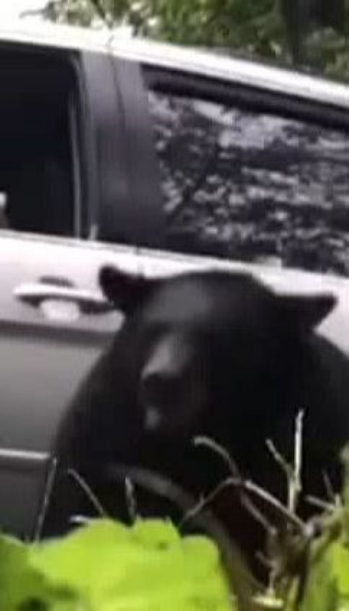 У США ведмідь навідався до приватної садиби та обнишпорив весь двір