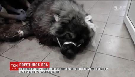 У Дніпрі ветеринари рятують вівчарку, яку розстріляли злочинці