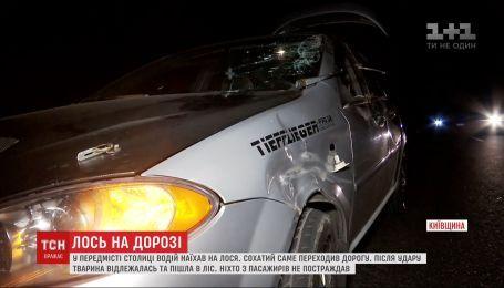 В пригороде Киева водитель легковушки сбил лося
